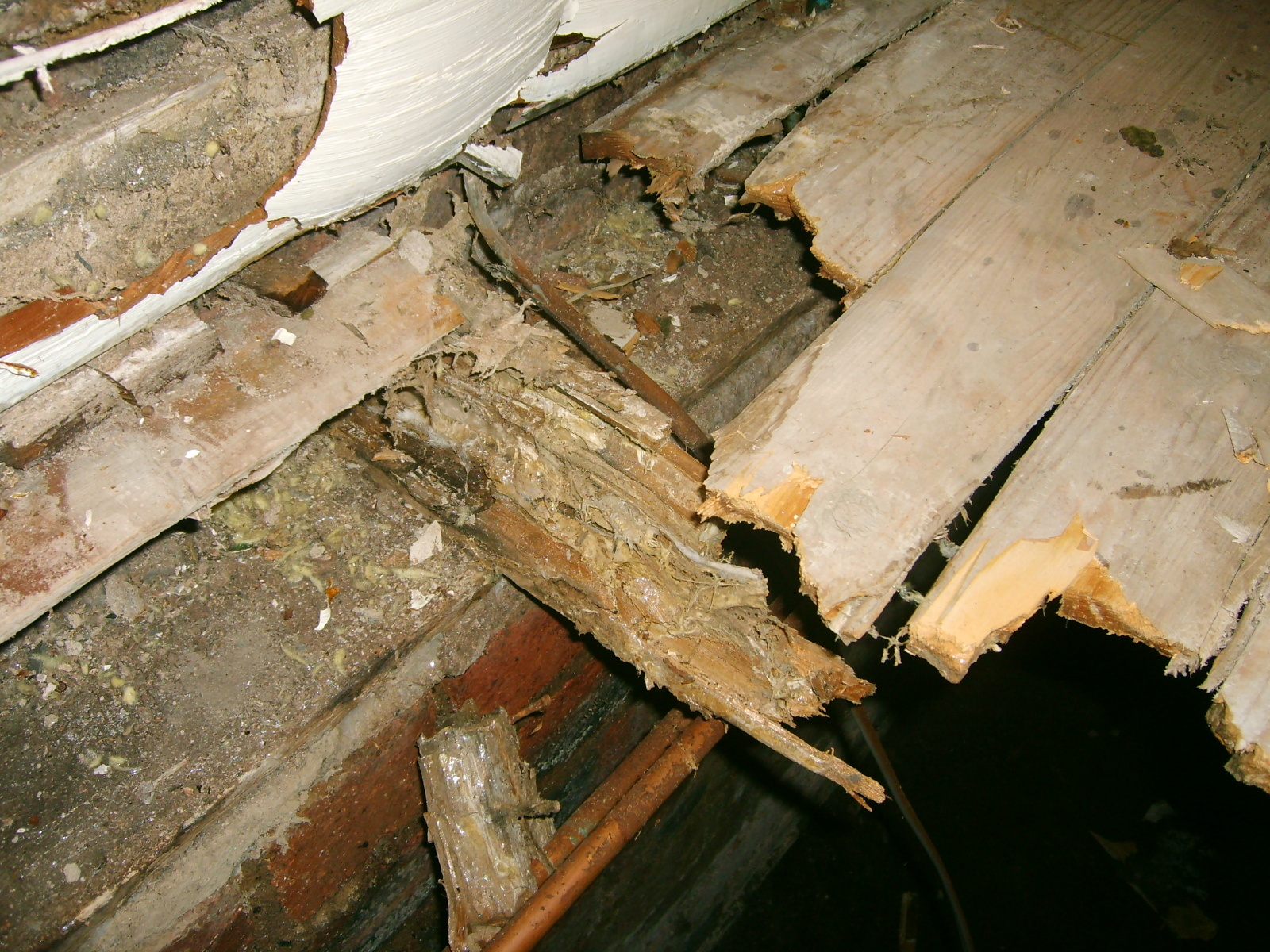 What Is Dry Rot Orange County Ca